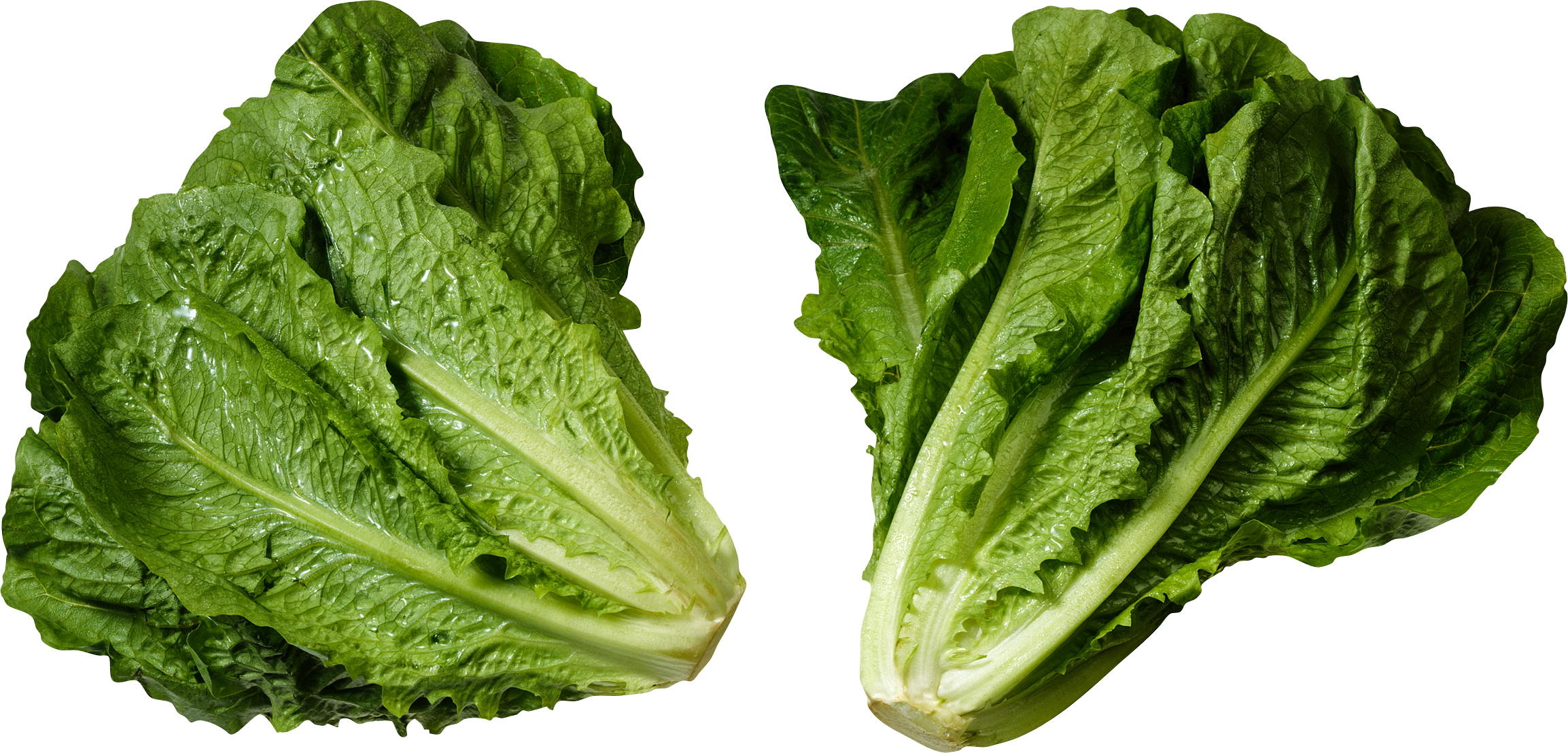 Lettuce garden png. Two isolated stock photo
