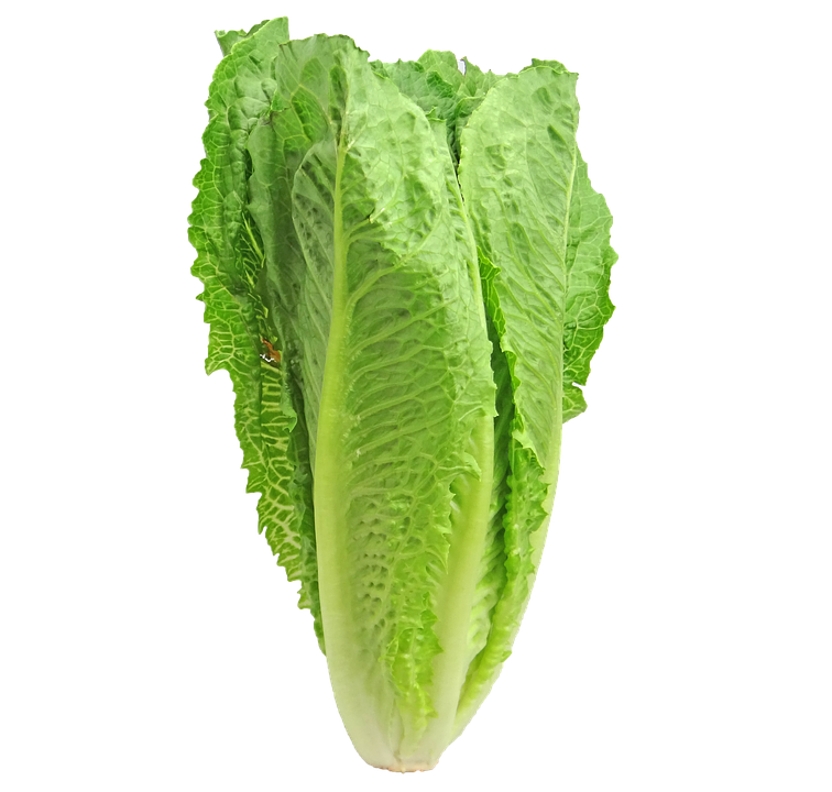 Kale transparent lettuce. Romaine advisory scott county