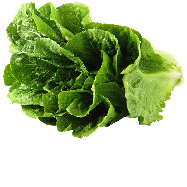 Lettuce png. Romaine image background arts