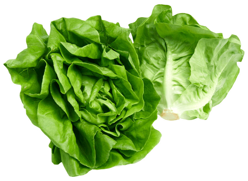 Lettuce png. Butterhead free images toppng