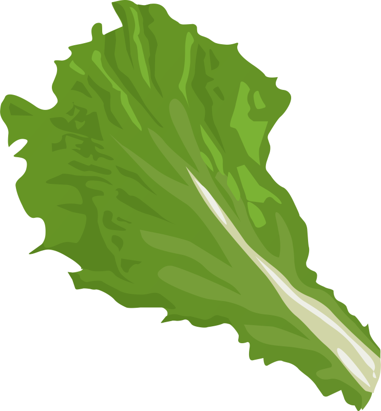 Vector vegetables lettuce. Collection of free cabbaging