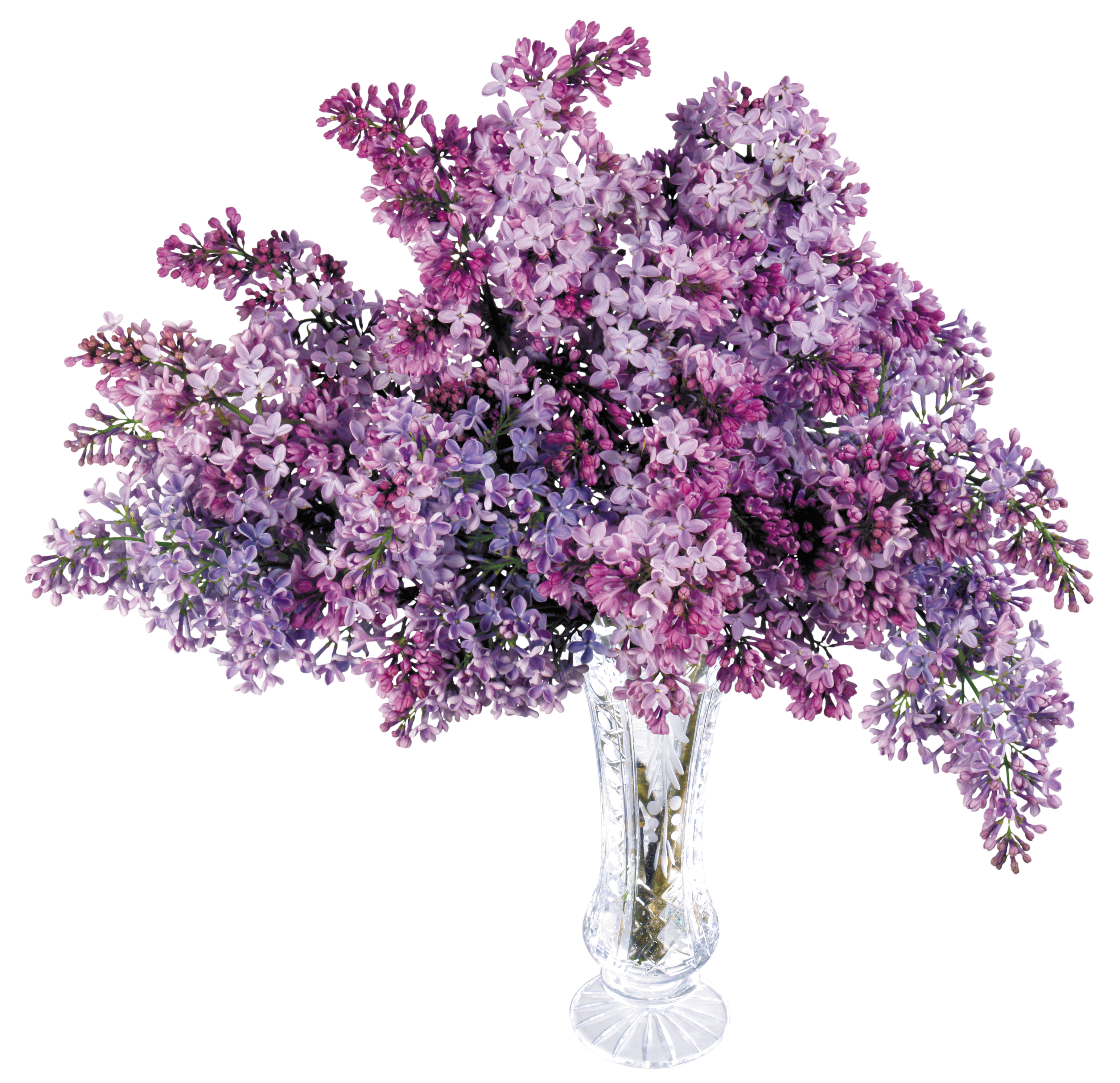 Lilac flower png. Transparent vase with picture