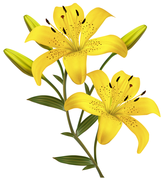 lilies clipart yellow bell