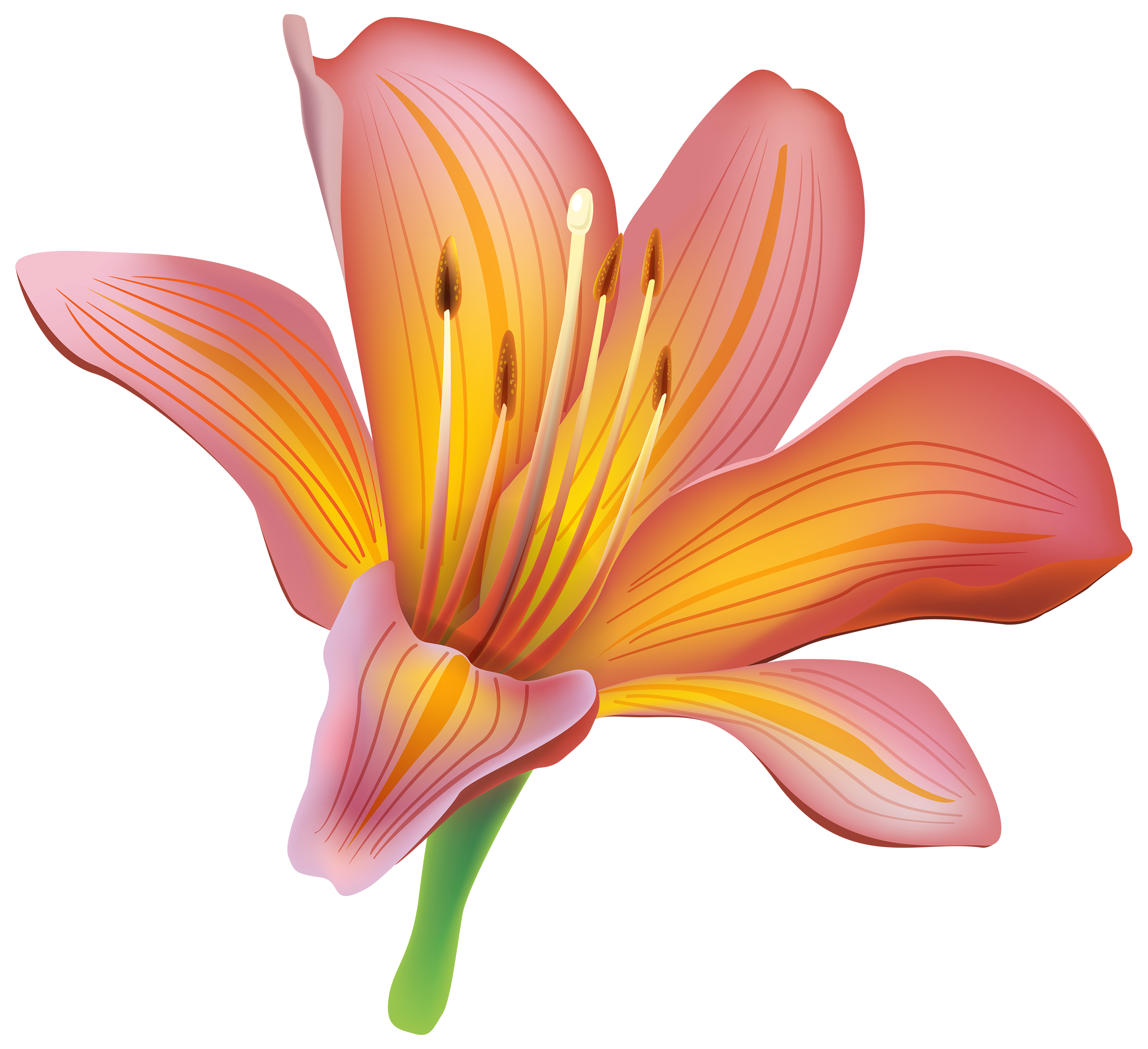 lily transparent vase png
