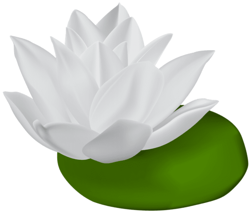 Lily transparent white. Download water png images