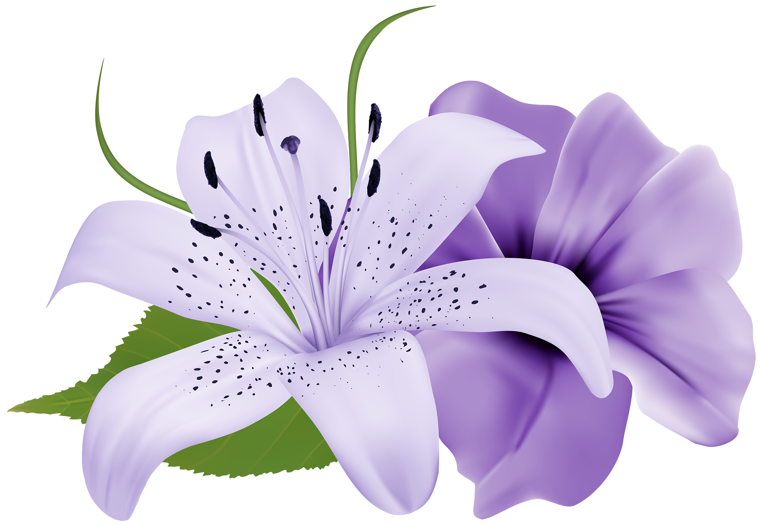 Purple deco clipart best. Transparent png flowers png black and white library
