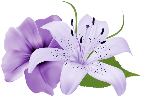 Lily clipart light purple flower. Pin by angie pantoja