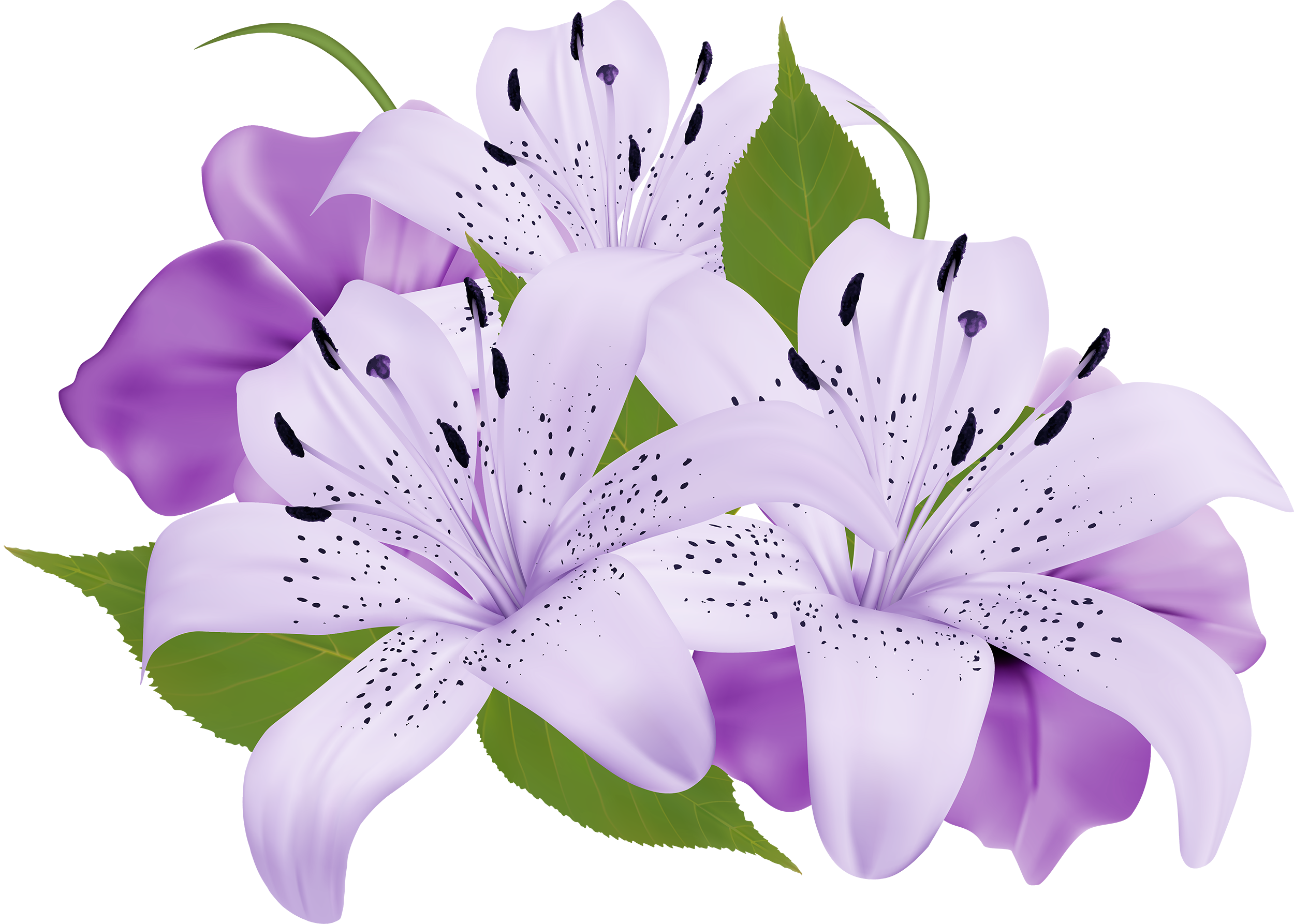 Pink and blue flowers png. Purple decorative clipart best