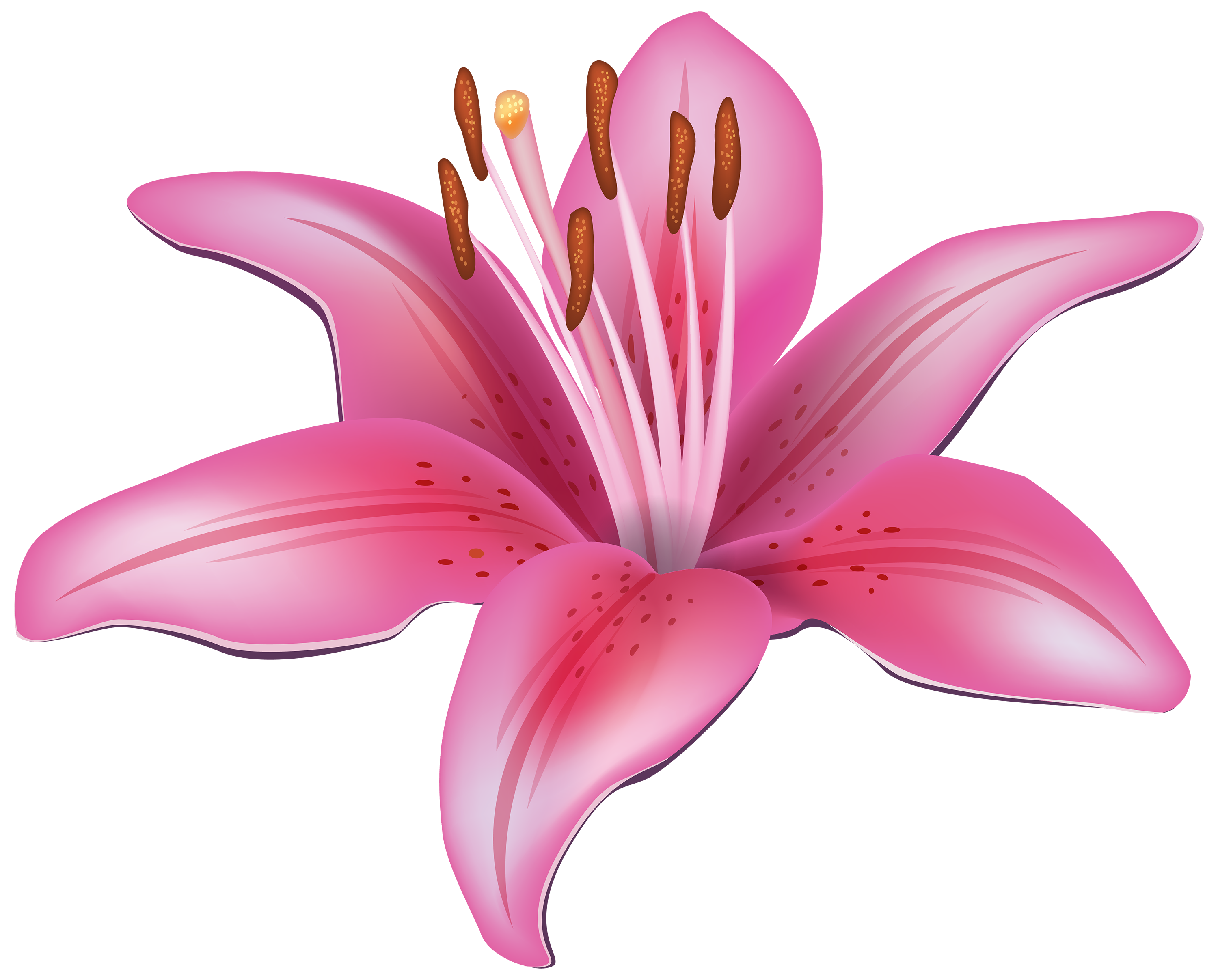 Lily clipart lillies. Pink flower png best