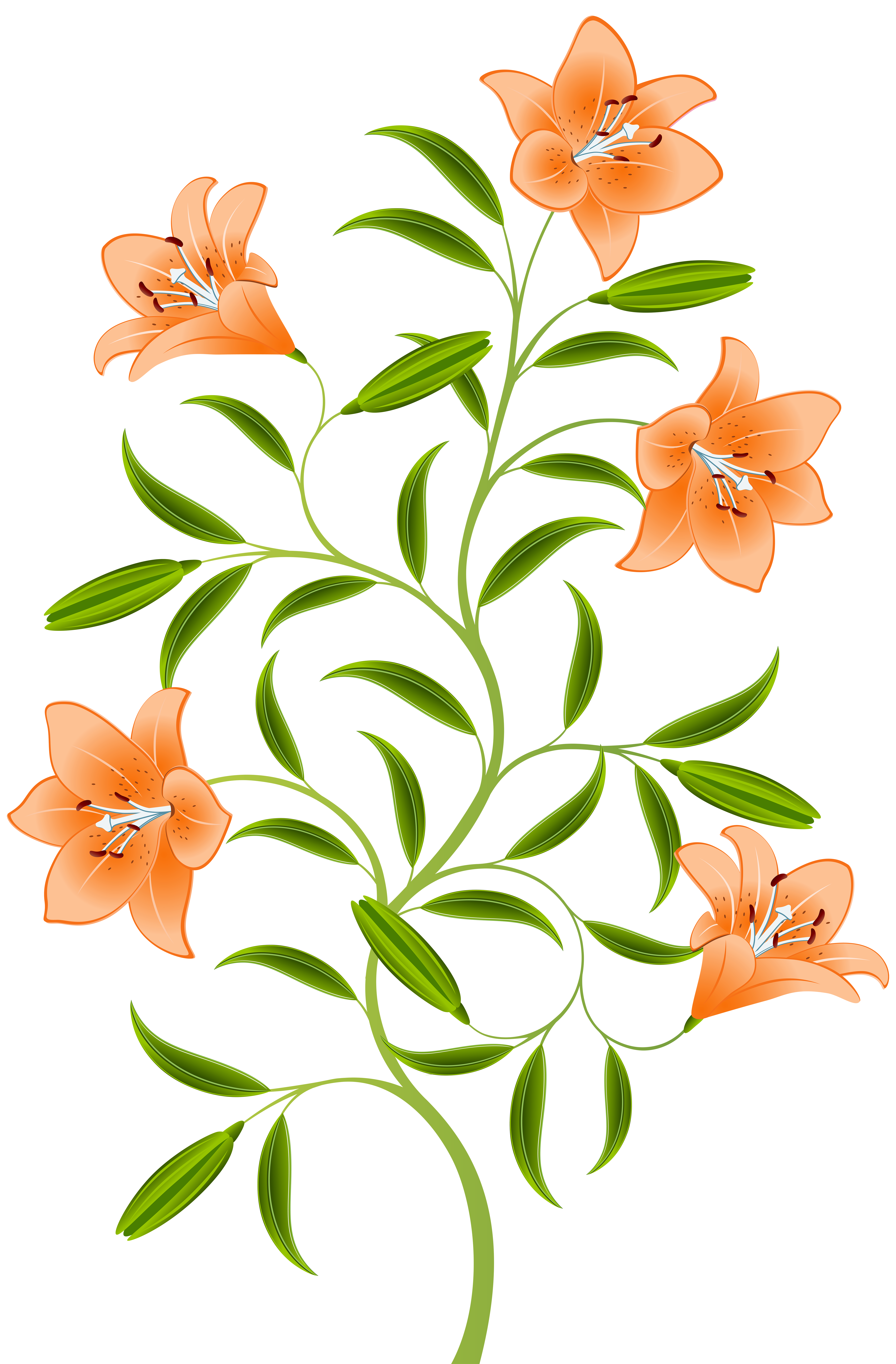 Lily clipart orange lily. Png clip art image