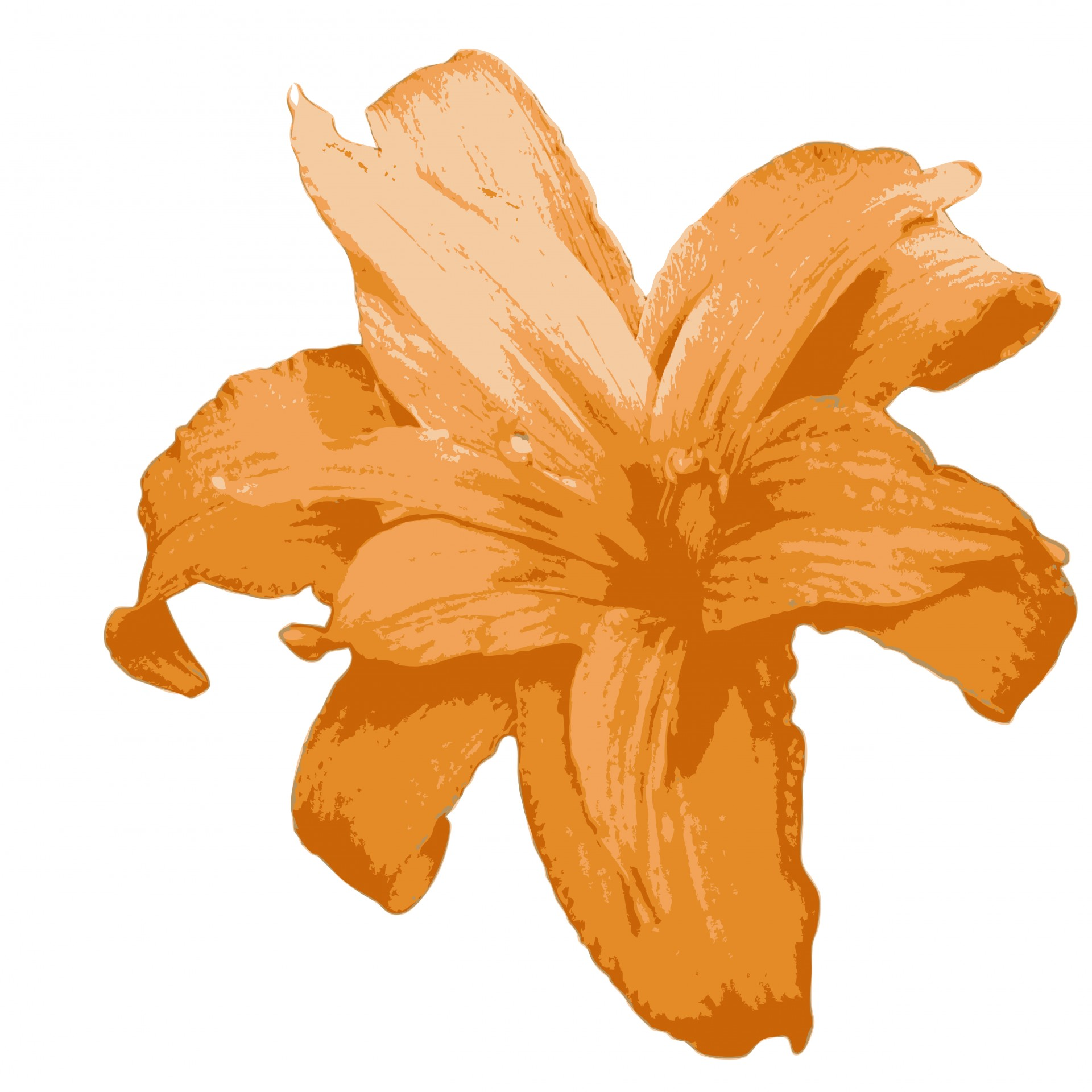 Lily clipart orange lily. Flower free stock photo