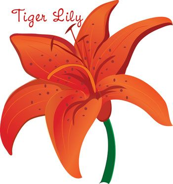 Lily clipart orange lily. Google image result for