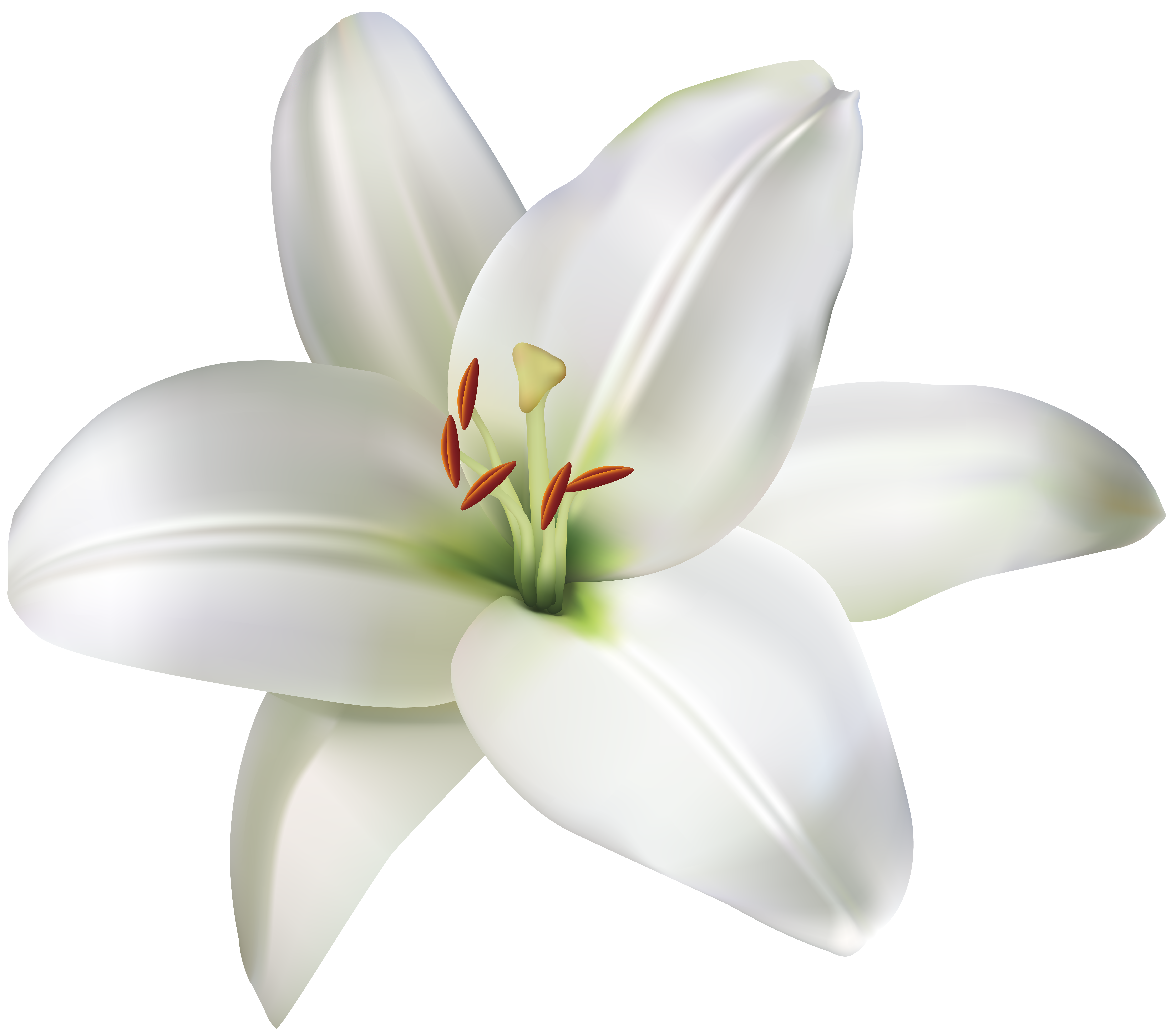 Lily flower png clip