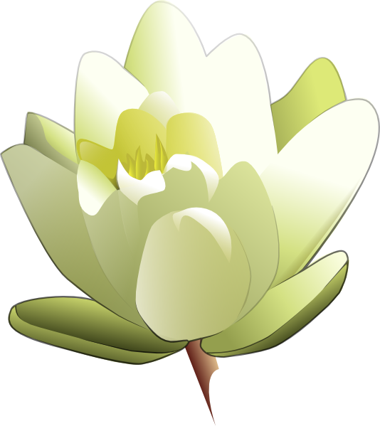 Lily transparent animated. Leland mcinnes water clip