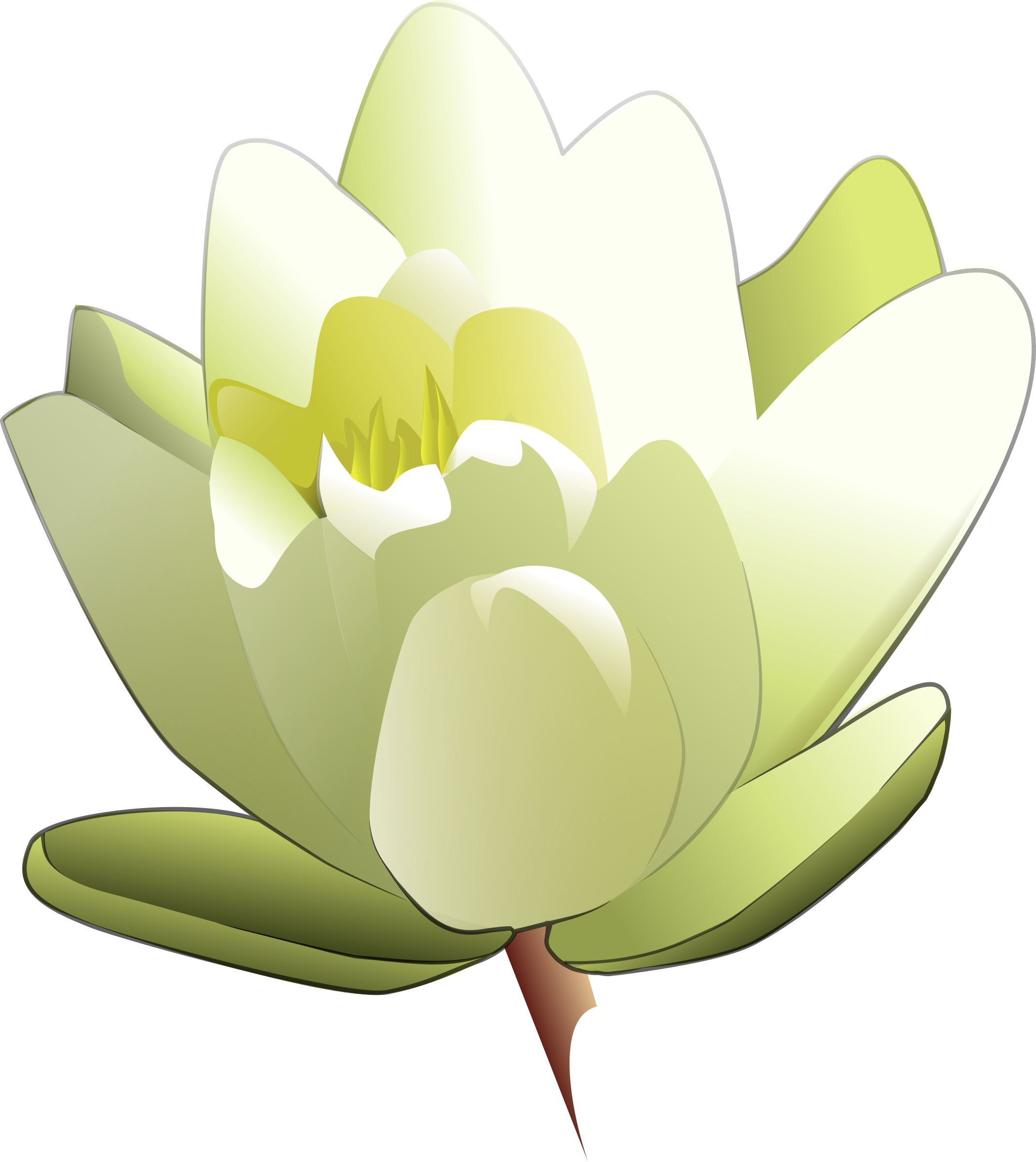 Lily transparent animated. Clipart water big image