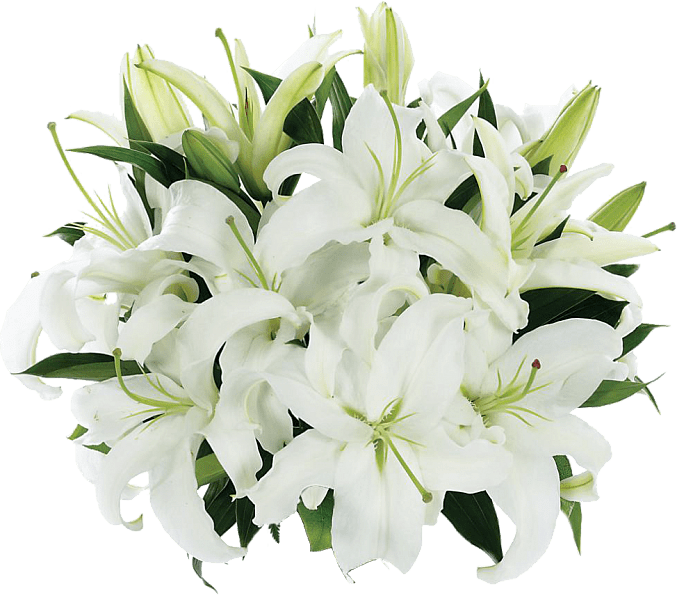 Lily transparent bouquet. Tight of lilies png