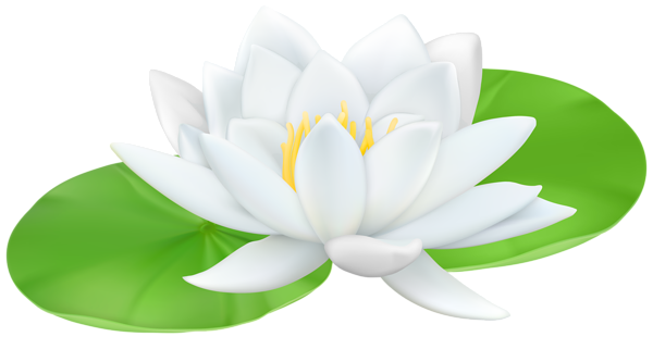 Lily transparent clip art. Water png image gallery