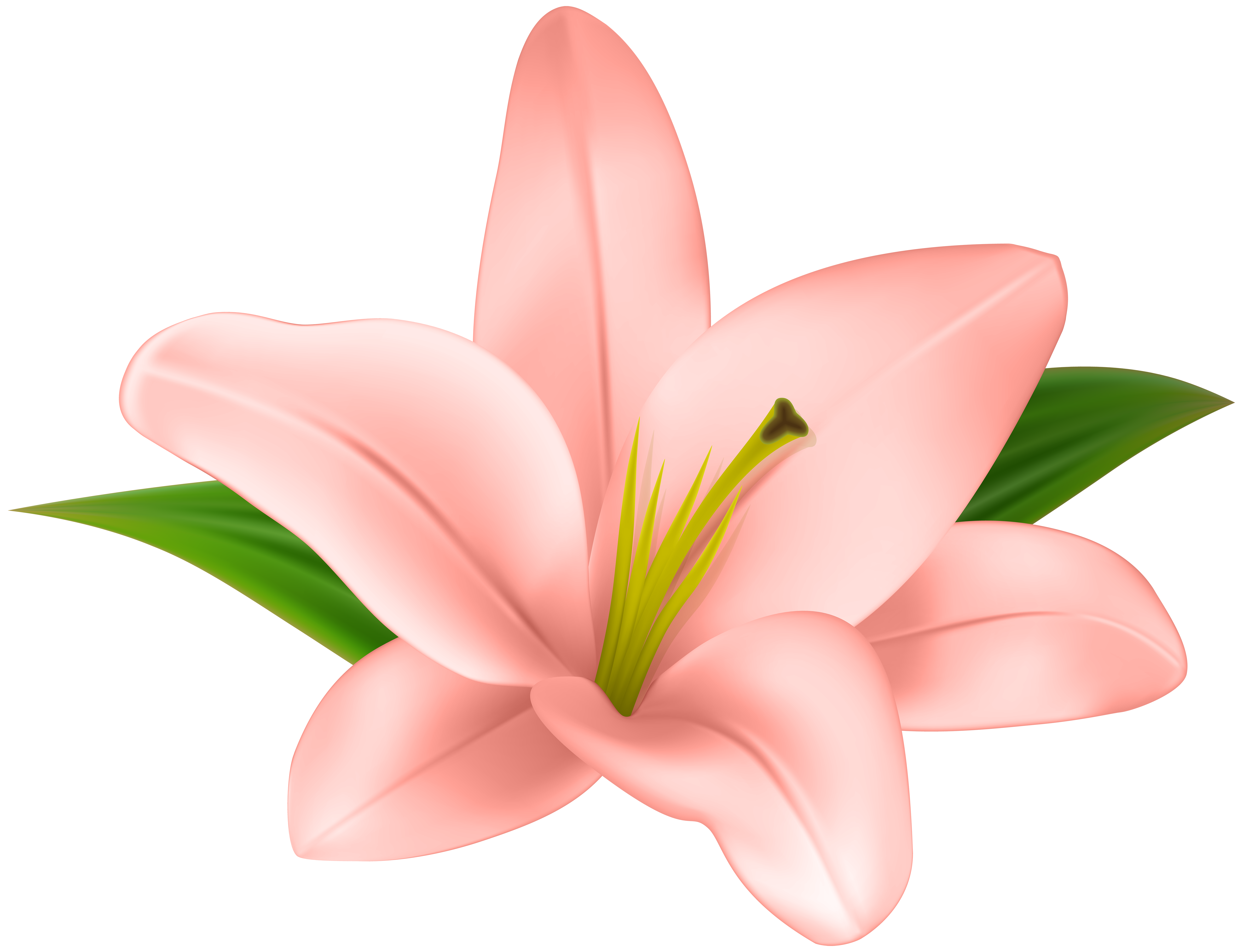 Transparent grave flower clipart. Stargazer lily at getdrawings