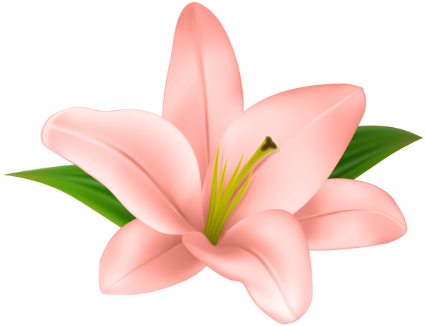 Lily transparent pink. Lilly flower clip art