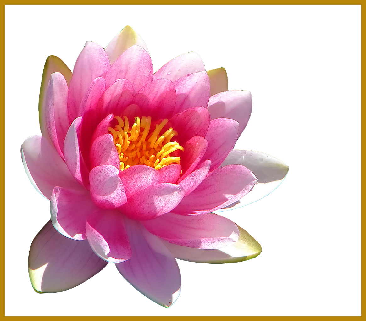 Lily transparent flower crown. Awesome water u requested