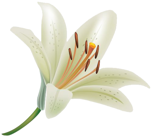 Lily transparent group. Download free png clipart