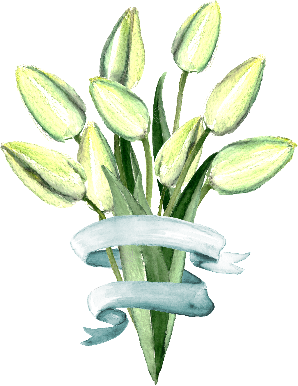 Stem drawing lily flower. Hand painted fresh transparent