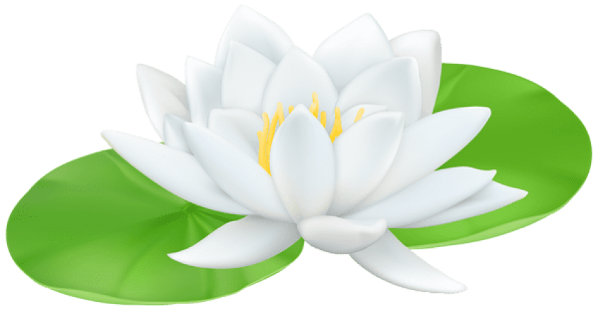 Lily transparent white water. Png free images toppng