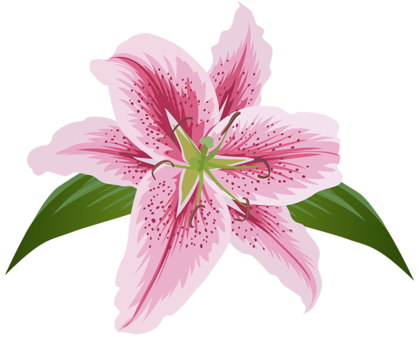 Lily transparent pink. Lilium flower clip art