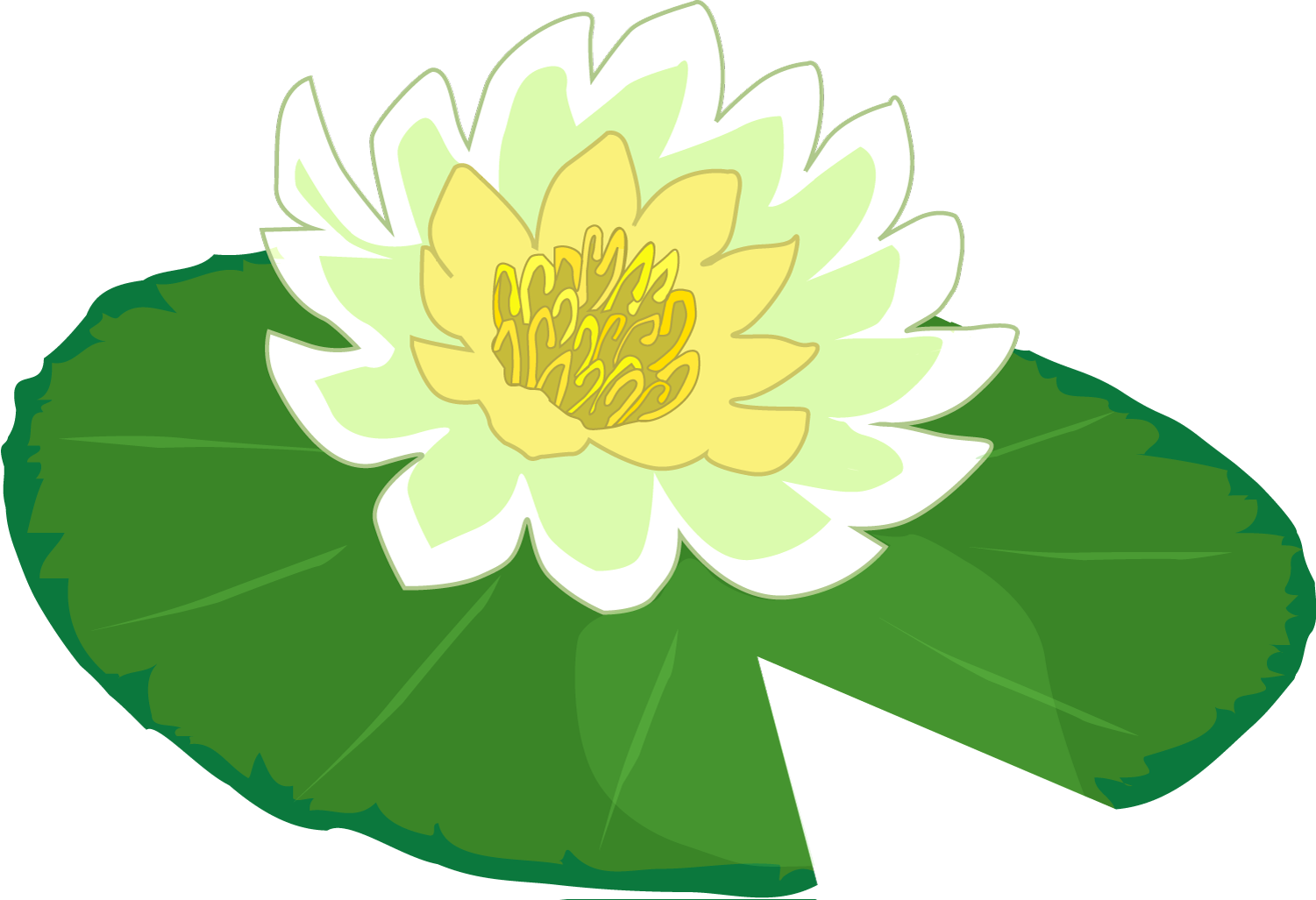 Lilypad drawing beautiful. Free lily pad download