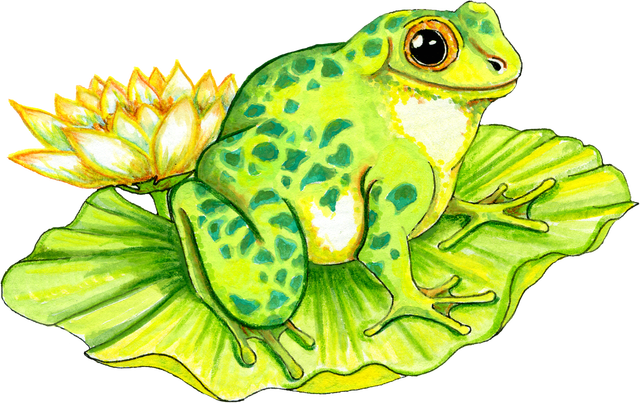 Lilypad drawing female frog. Free transparent png files