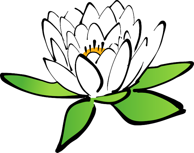 Lilypad drawing water lily. Clipart