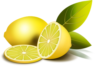 Limon vector lemon fruit. Dibujos de limones para