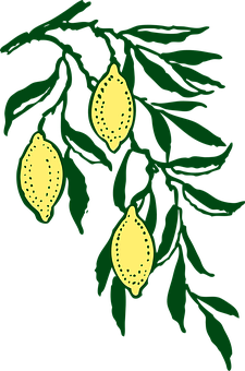 Limon vector lemon leave. Tree yellow ripe leaves