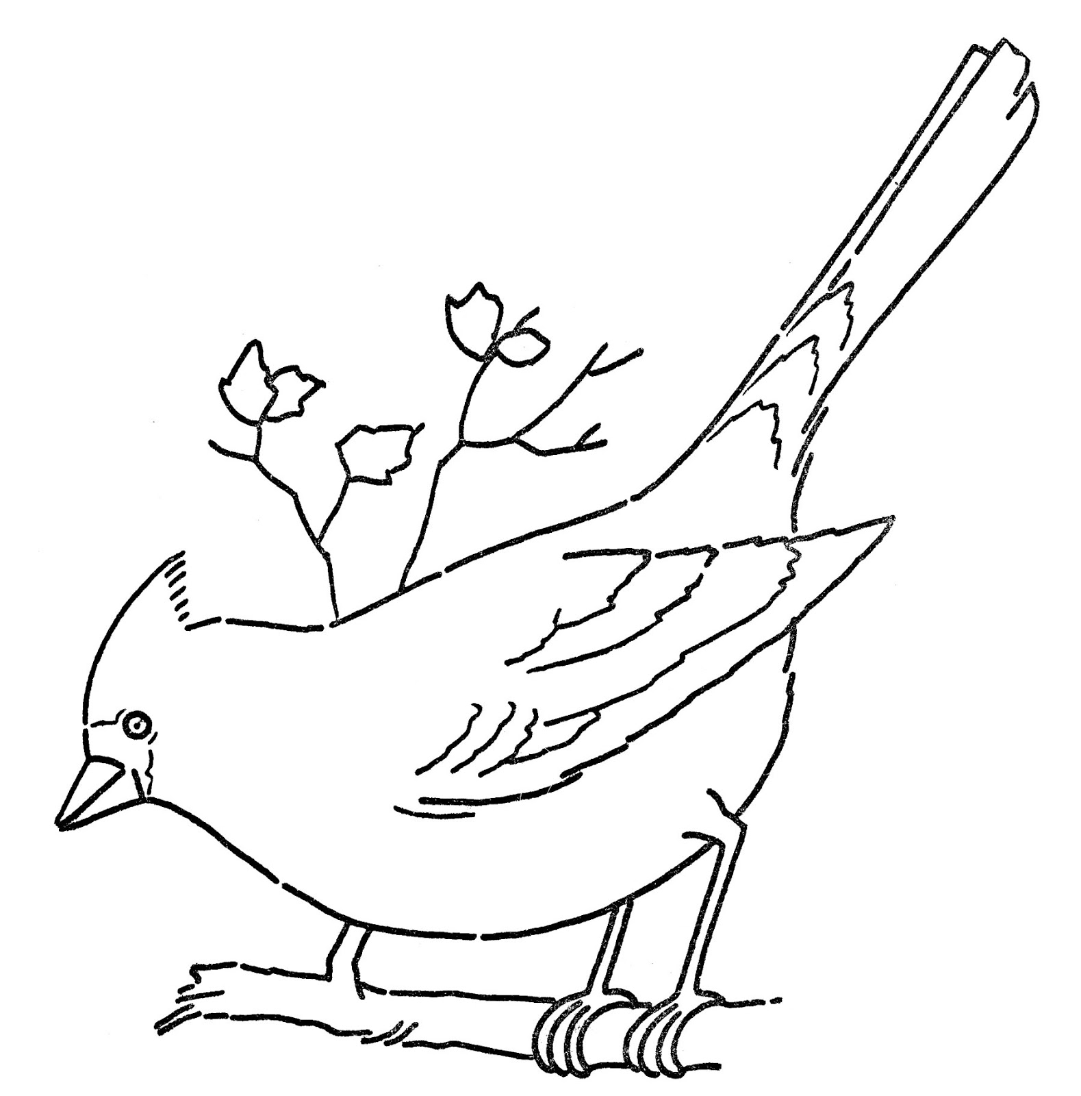 Line clipart bird. Art coloring page cardinal