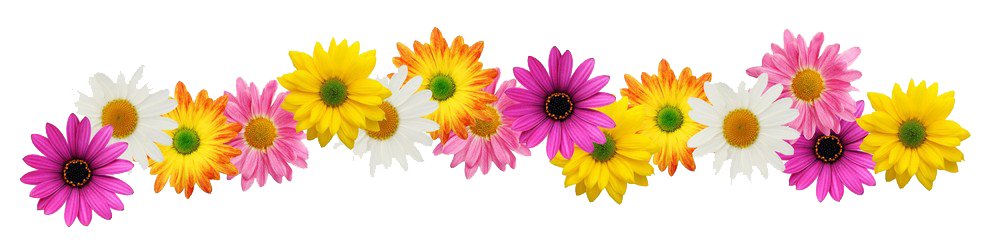 Line of flowers png. English exercises cheap thrills