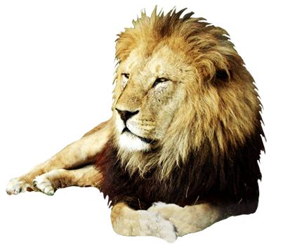 angry freeuse download. Lion clip males banner library download