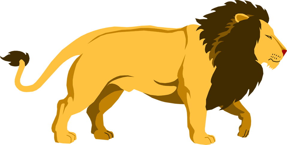 Lions vector walking. Collection of lion