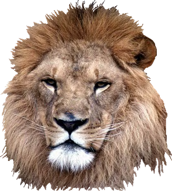 Lion head png. Transparent pictures free icons