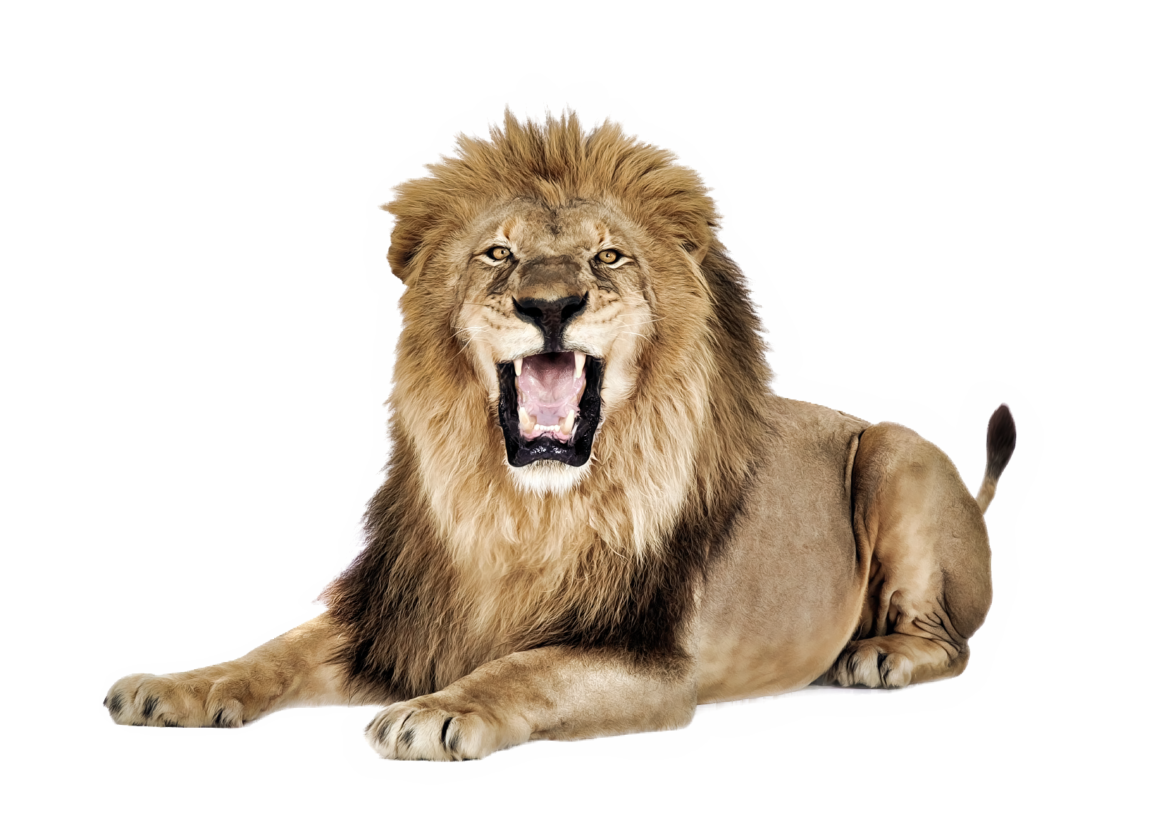 Lion png. Images free download lions
