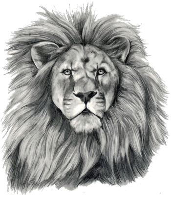 Drawing lions pen. Small lion tatoos for