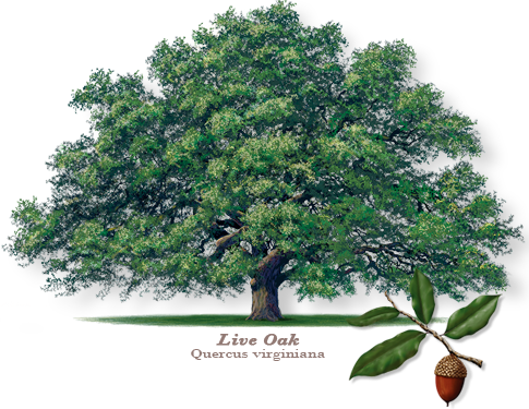 Live oak png. Learn about wilt briggs