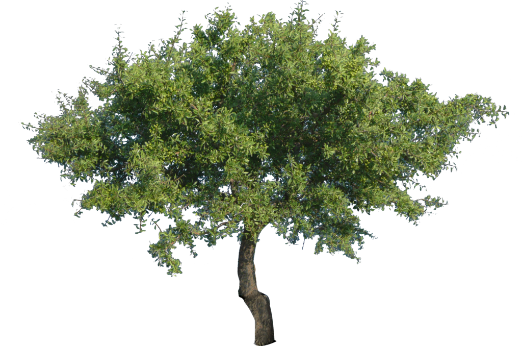3 vector tree. Png with transparency by