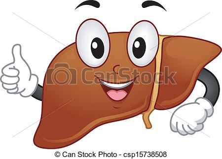 Liver clipart. Happy mascot illustration featuring royalty free stock