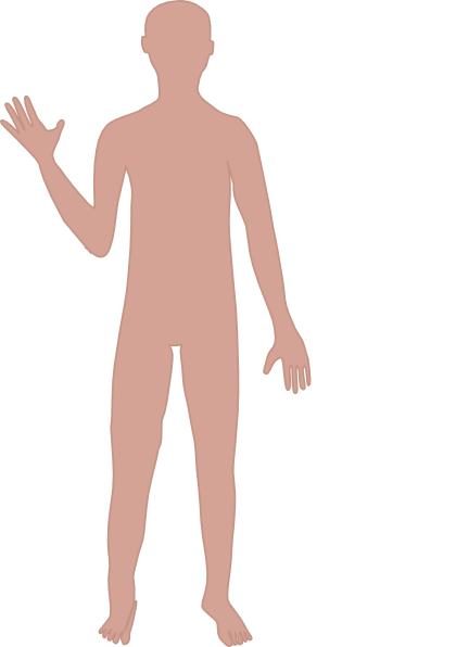 Body clipart illustration. Male clip art library