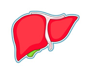 Liver clipart body clipart. Search results for human
