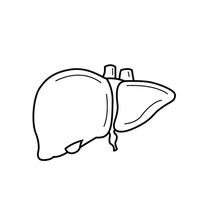 Liver clipart outline. Black and white letters