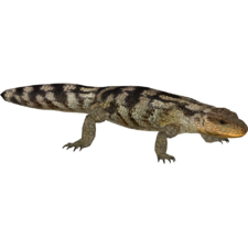 Lizard tongue png. Blotched blue tongued mibound