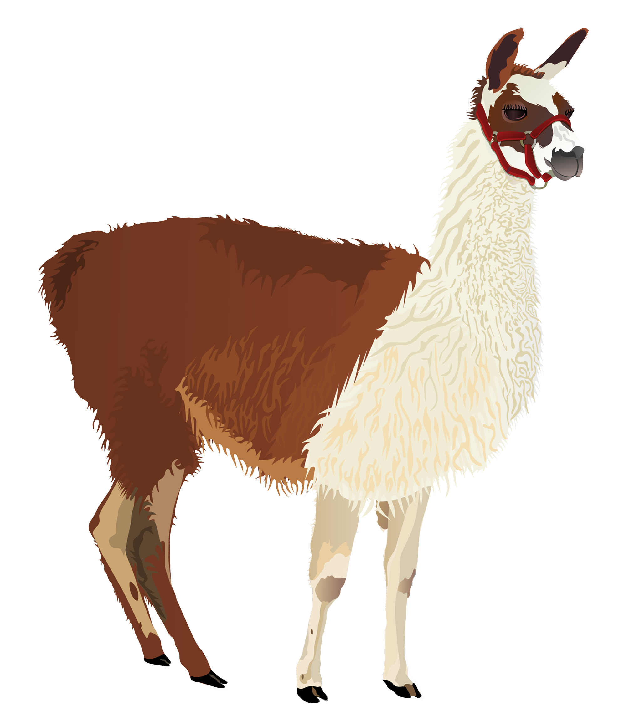 Concentrate product overview. Llama png png royalty free library