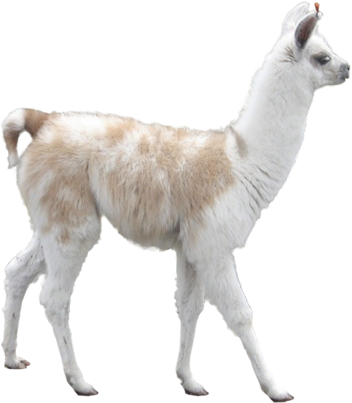 Llama background png. R photoshopbattles battle cutouts