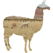 Llama background png. Alpaca with desert in